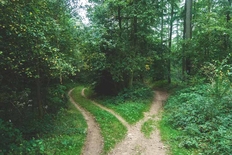 Divergent Paths in Forest